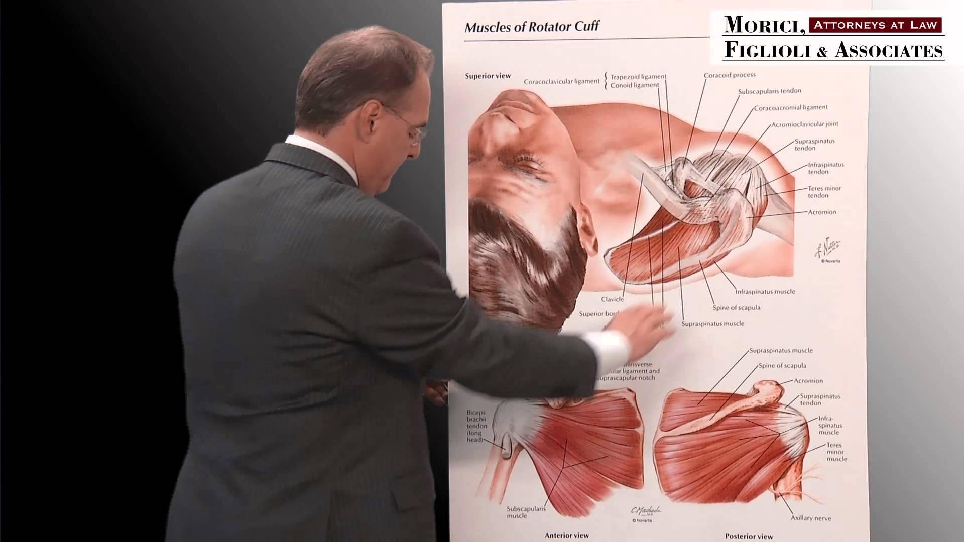 Personal Injury Attorney in Chicago | Rotator Cuff Anatomy